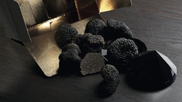La truffe de Provence, en quête du Diamant Noir…